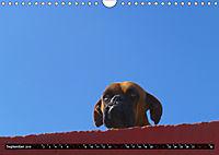 Strassenhunde 2019 (Wandkalender 2019 DIN A4 quer) - Produktdetailbild 9