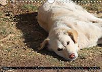 Strassenhunde 2019 (Wandkalender 2019 DIN A4 quer) - Produktdetailbild 10