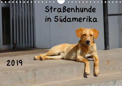 Strassenhunde 2019 (Wandkalender 2019 DIN A4 quer), Jochen Gerken
