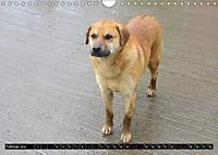 Strassenhunde 2019 (Wandkalender 2019 DIN A4 quer) - Produktdetailbild 2