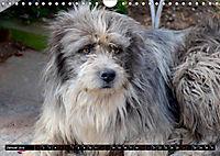 Strassenhunde 2019 (Wandkalender 2019 DIN A4 quer) - Produktdetailbild 1