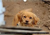 Strassenhunde 2019 (Wandkalender 2019 DIN A4 quer) - Produktdetailbild 6