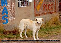 Straßenhunde 2019 (Wandkalender 2019 DIN A4 quer) - Produktdetailbild 8