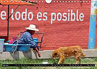 Straßenhunde 2019 (Wandkalender 2019 DIN A4 quer) - Produktdetailbild 7
