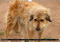 Strassenhunde 2019 (Wandkalender 2019 DIN A4 quer) - Produktdetailbild 12