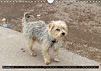 Strassenhunde 2019 (Wandkalender 2019 DIN A4 quer) - Produktdetailbild 11