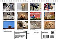 Strassenhunde 2019 (Wandkalender 2019 DIN A4 quer) - Produktdetailbild 13