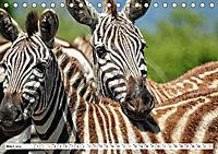 Streifen - Zebras in freier Wildbahn (Tischkalender 2019 DIN A5 quer) - Produktdetailbild 3