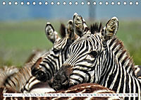 Streifen - Zebras in freier Wildbahn (Tischkalender 2019 DIN A5 quer) - Produktdetailbild 7
