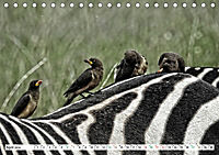 Streifen - Zebras in freier Wildbahn (Tischkalender 2019 DIN A5 quer) - Produktdetailbild 4