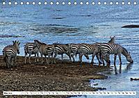 Streifen - Zebras in freier Wildbahn (Tischkalender 2019 DIN A5 quer) - Produktdetailbild 5