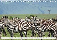 Streifen - Zebras in freier Wildbahn (Tischkalender 2019 DIN A5 quer) - Produktdetailbild 9