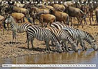 Streifen - Zebras in freier Wildbahn (Tischkalender 2019 DIN A5 quer) - Produktdetailbild 10