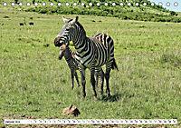 Streifen - Zebras in freier Wildbahn (Tischkalender 2019 DIN A5 quer) - Produktdetailbild 1