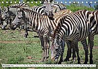 Streifen - Zebras in freier Wildbahn (Tischkalender 2019 DIN A5 quer) - Produktdetailbild 11
