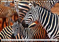 Streifen - Zebras in freier Wildbahn (Tischkalender 2019 DIN A5 quer) - Produktdetailbild 12