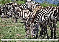 Streifen - Zebras in freier Wildbahn (Wandkalender 2019 DIN A3 quer) - Produktdetailbild 11
