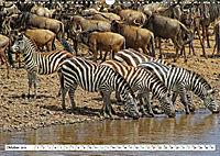 Streifen - Zebras in freier Wildbahn (Wandkalender 2019 DIN A3 quer) - Produktdetailbild 10