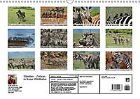 Streifen - Zebras in freier Wildbahn (Wandkalender 2019 DIN A3 quer) - Produktdetailbild 13