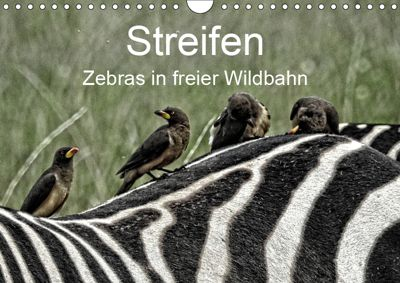Streifen - Zebras in freier Wildbahn (Wandkalender 2019 DIN A4 quer), Susan Michel