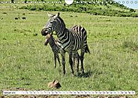 Streifen - Zebras in freier Wildbahn (Wandkalender 2019 DIN A4 quer) - Produktdetailbild 1