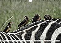 Streifen - Zebras in freier Wildbahn (Wandkalender 2019 DIN A4 quer) - Produktdetailbild 4