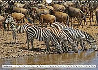 Streifen - Zebras in freier Wildbahn (Wandkalender 2019 DIN A4 quer) - Produktdetailbild 10