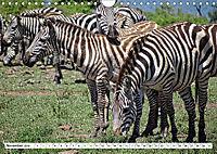 Streifen - Zebras in freier Wildbahn (Wandkalender 2019 DIN A4 quer) - Produktdetailbild 11