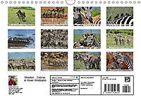 Streifen - Zebras in freier Wildbahn (Wandkalender 2019 DIN A4 quer) - Produktdetailbild 13