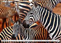 Streifen - Zebras in freier Wildbahn (Wandkalender 2019 DIN A4 quer) - Produktdetailbild 12