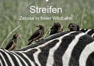 Streifen - Zebras in freier Wildbahn (Wandkalender 2019 DIN A2 quer), Susan MIchel