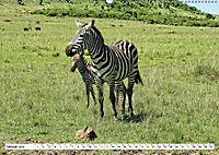 Streifen - Zebras in freier Wildbahn (Wandkalender 2019 DIN A2 quer) - Produktdetailbild 1