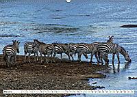 Streifen - Zebras in freier Wildbahn (Wandkalender 2019 DIN A2 quer) - Produktdetailbild 5