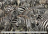Streifen - Zebras in freier Wildbahn (Wandkalender 2019 DIN A2 quer) - Produktdetailbild 6