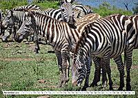 Streifen - Zebras in freier Wildbahn (Wandkalender 2019 DIN A2 quer) - Produktdetailbild 11
