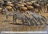 Streifen - Zebras in freier Wildbahn (Wandkalender 2019 DIN A2 quer) - Produktdetailbild 10