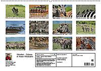 Streifen - Zebras in freier Wildbahn (Wandkalender 2019 DIN A2 quer) - Produktdetailbild 13