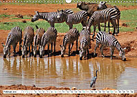 Streifen - Zebras in freier Wildbahn (Wandkalender 2019 DIN A3 quer) - Produktdetailbild 2