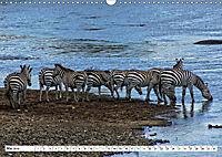Streifen - Zebras in freier Wildbahn (Wandkalender 2019 DIN A3 quer) - Produktdetailbild 5
