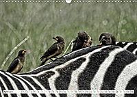 Streifen - Zebras in freier Wildbahn (Wandkalender 2019 DIN A3 quer) - Produktdetailbild 4