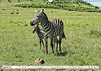 Streifen - Zebras in freier Wildbahn (Wandkalender 2019 DIN A3 quer) - Produktdetailbild 1