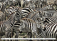 Streifen - Zebras in freier Wildbahn (Wandkalender 2019 DIN A3 quer) - Produktdetailbild 6