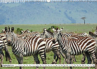 Streifen - Zebras in freier Wildbahn (Wandkalender 2019 DIN A3 quer) - Produktdetailbild 9