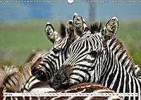 Streifen - Zebras in freier Wildbahn (Wandkalender 2019 DIN A3 quer) - Produktdetailbild 7