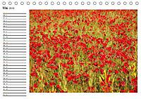 Streifzug durch die Provence (Tischkalender 2019 DIN A5 quer) - Produktdetailbild 5