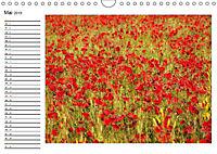Streifzug durch die Provence (Wandkalender 2019 DIN A4 quer) - Produktdetailbild 5