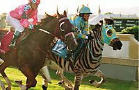 Stripes - Ein Zebra im Rennstall - Produktdetailbild 9