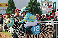 Stripes - Ein Zebra im Rennstall - Produktdetailbild 5