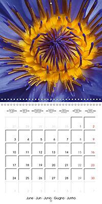 Structure of life (Wall Calendar 2019 300 × 300 mm Square) - Produktdetailbild 6