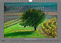 Strukturen im Weinbau (Wandkalender 2019 DIN A4 quer) - Produktdetailbild 7
